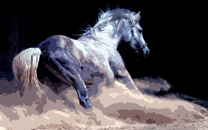 horse wallpapers splendid