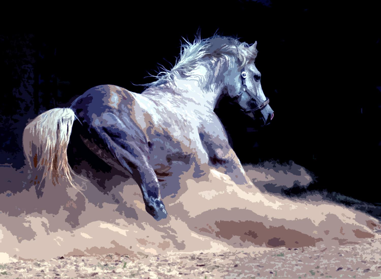 horse wallpapers splendid