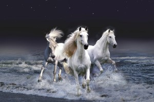 horse wallpapers stunning