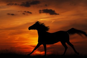 horse wallpapers sunrise