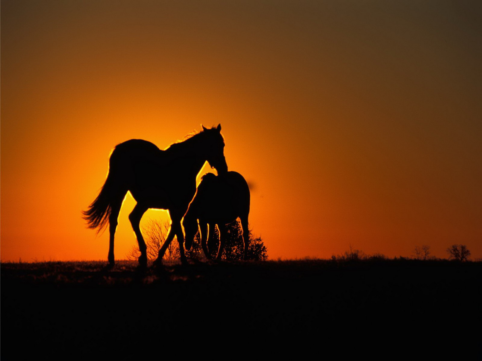 horse wallpapers sunset