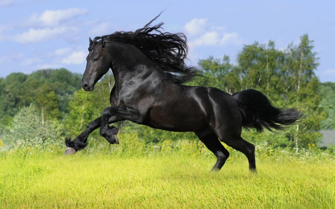 horse wallpapers widescreen