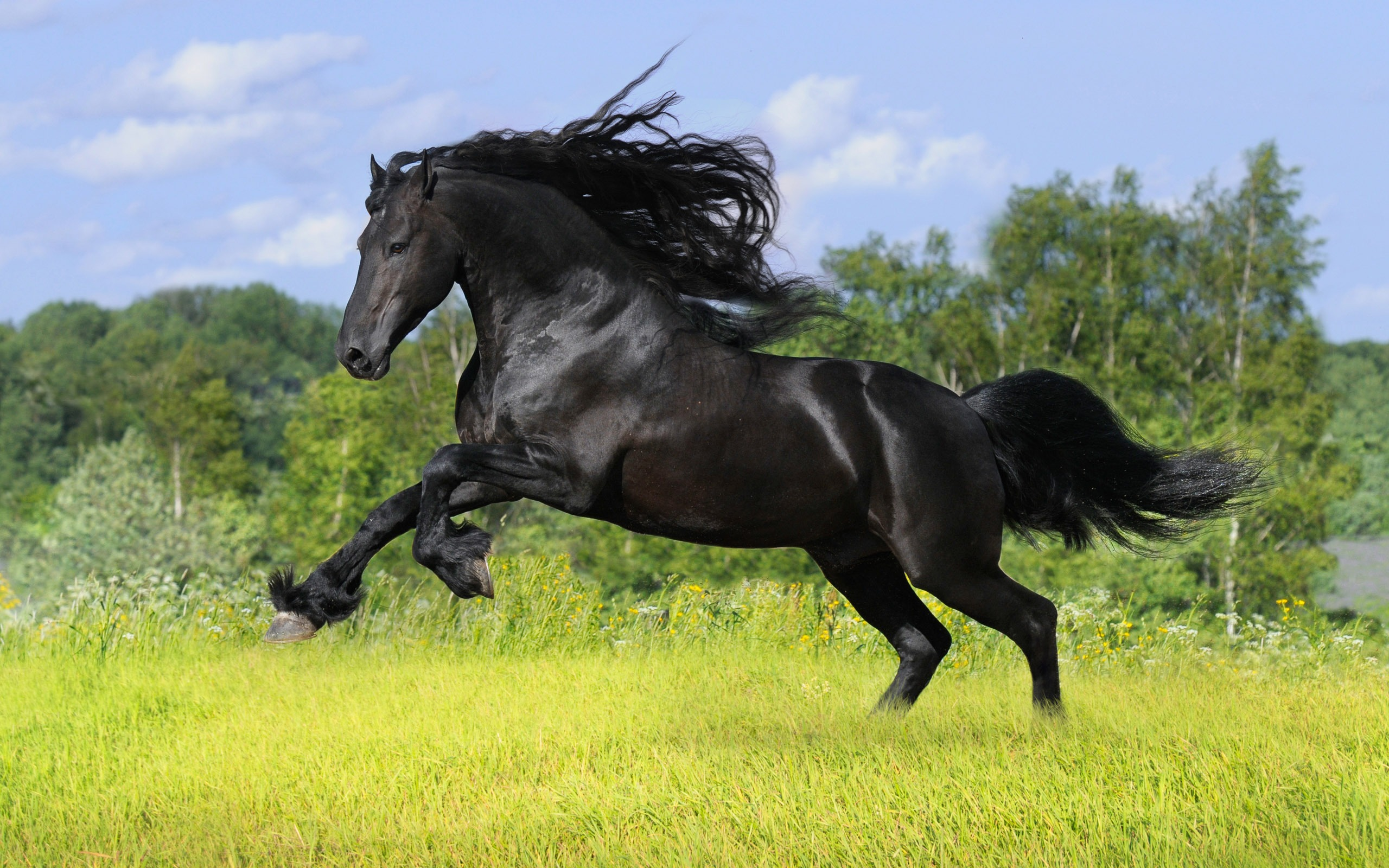 horse wallpapers widescreen