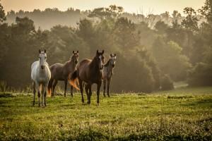 horse wallpapers wild