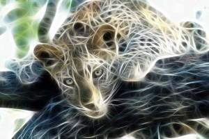 leopard wallpaper 3d