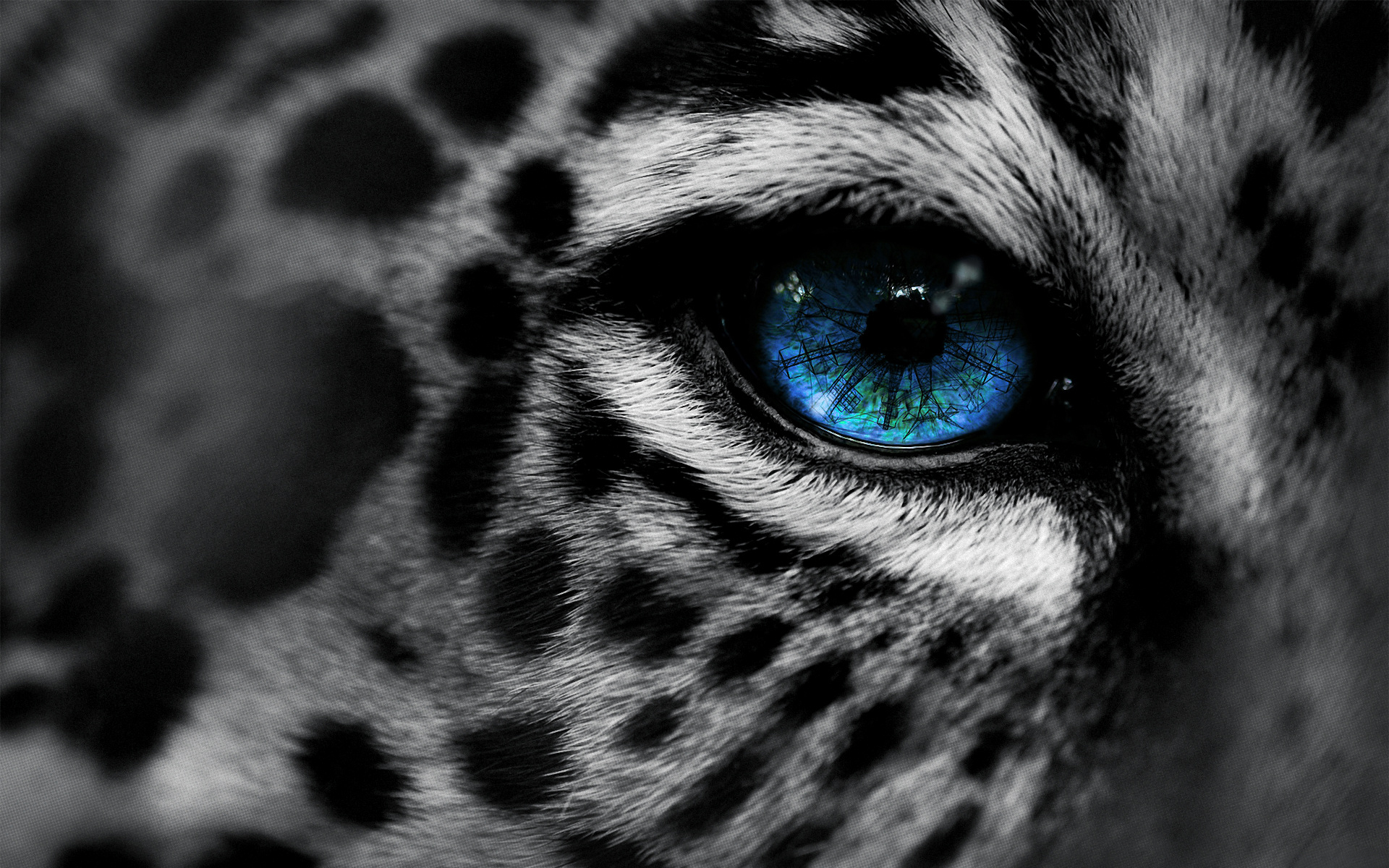 Leopard Wallpaper Blue Eyes - HD Desktop Wallpapers