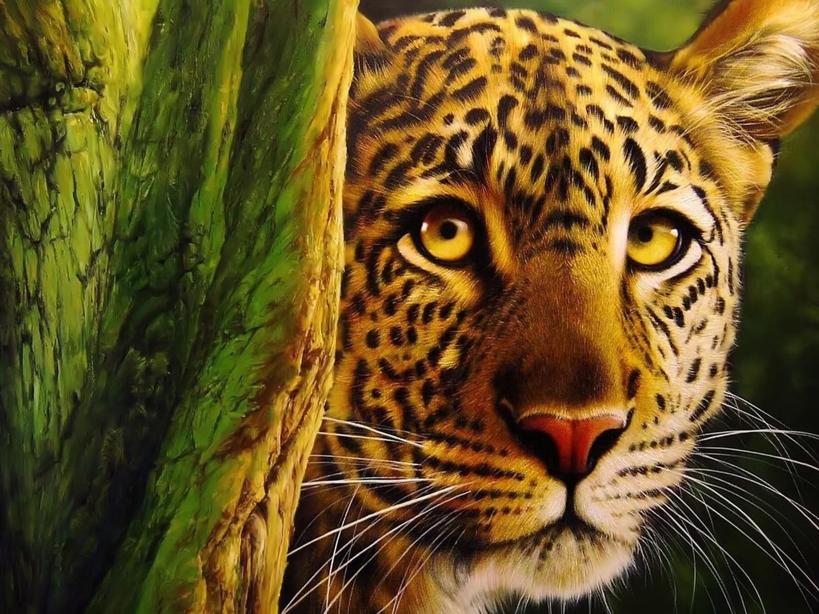 leopard wallpaper magnificent