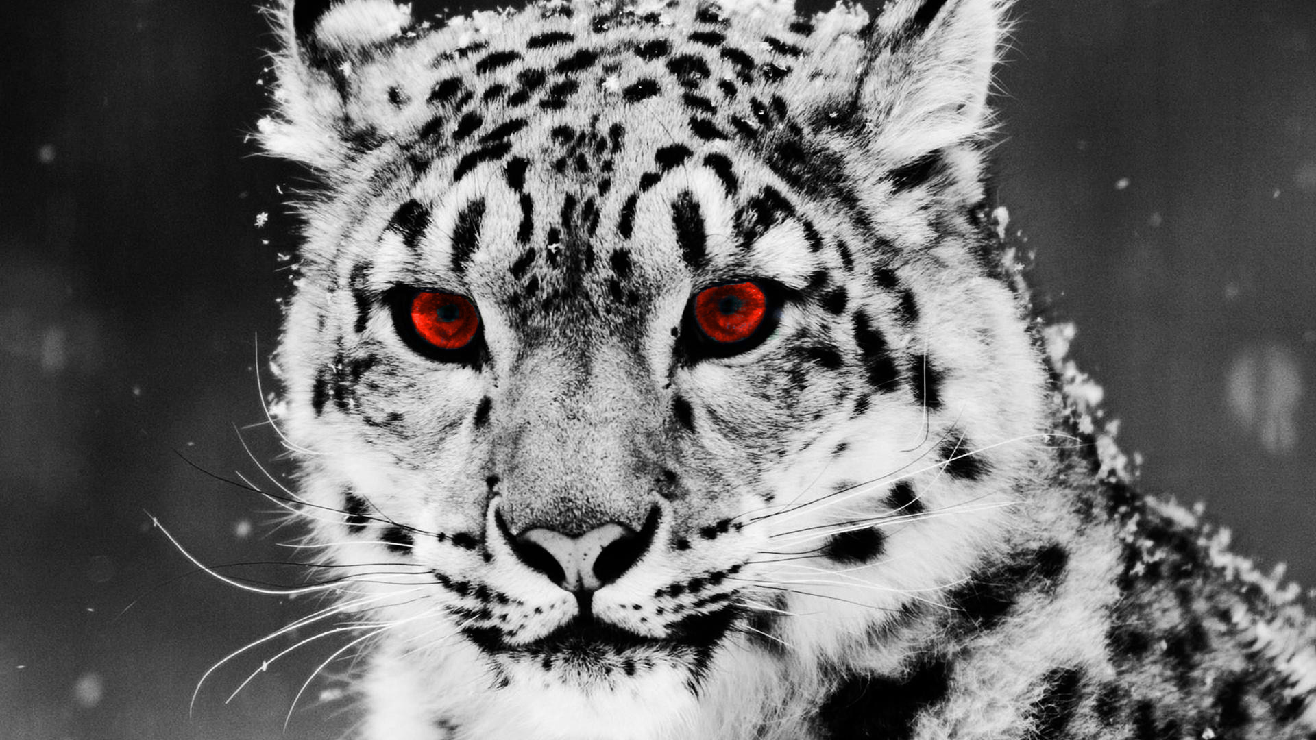leopard wallpaper red eyes