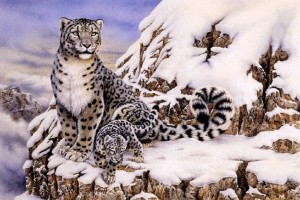 leopard wallpaper snow cute