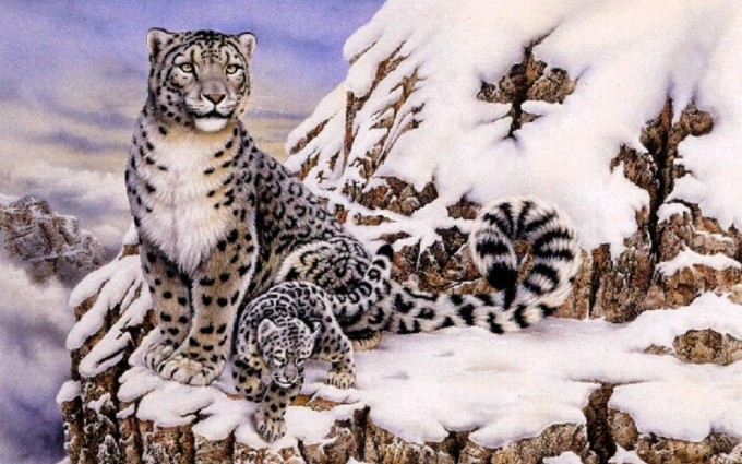 leopard wallpaper snow cute