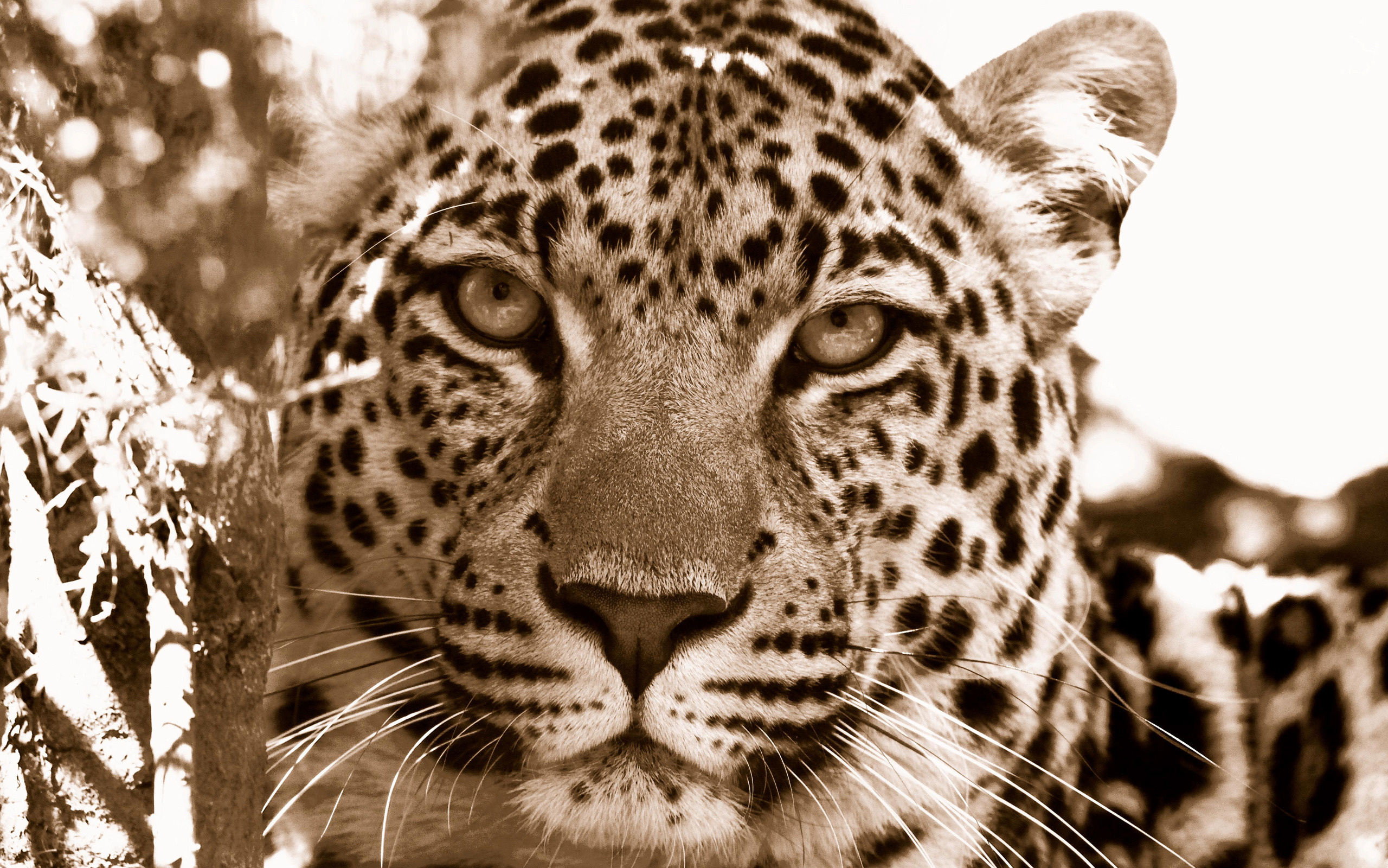 leopard wallpaper vintage