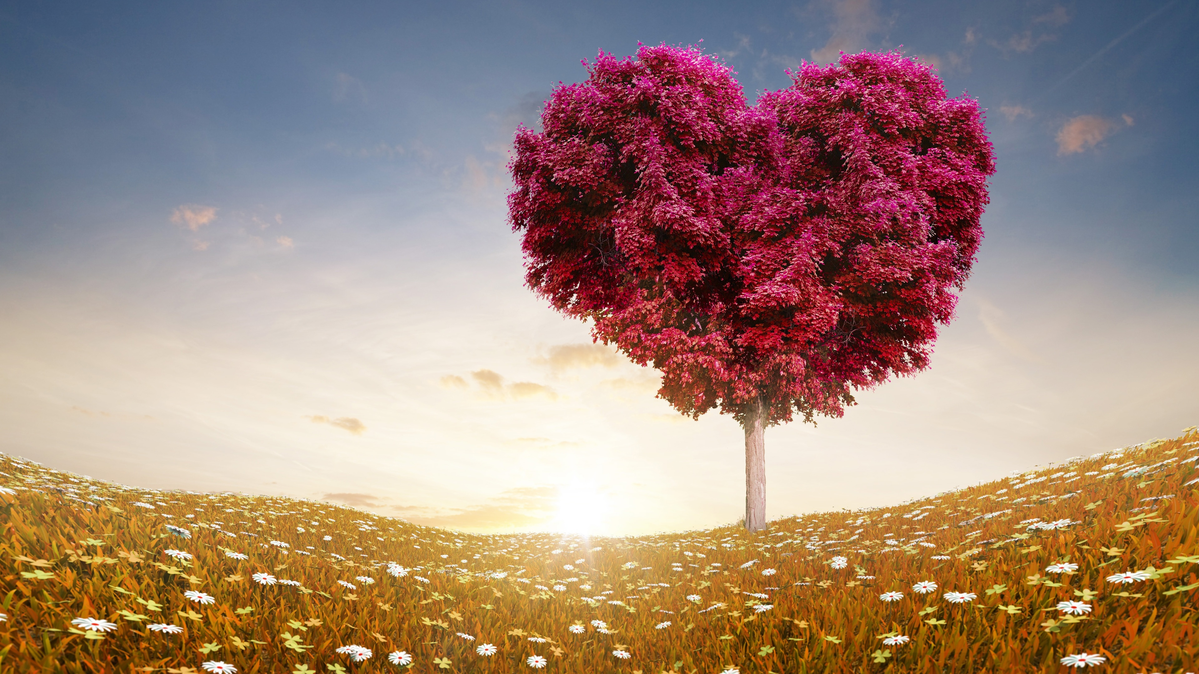 love wallpaper tree flowers - HD Desktop Wallpapers 4k HD