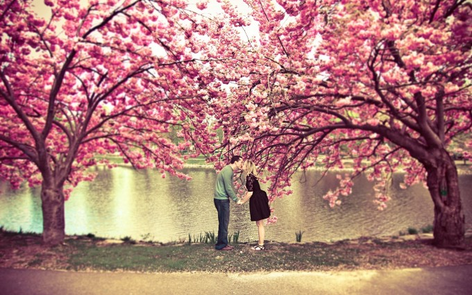 love wallpaper treest