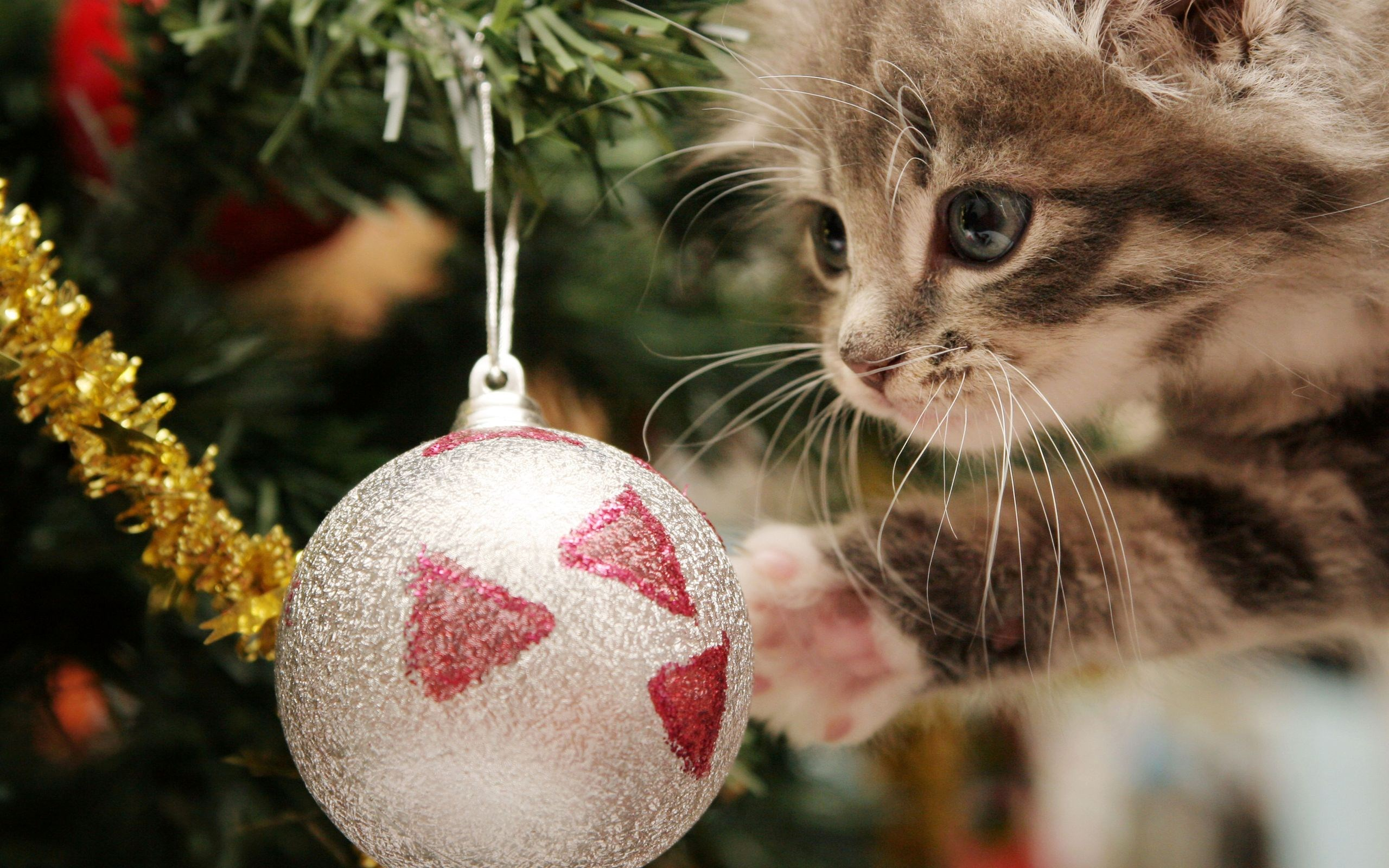 merry christmas wallpapers cat A4