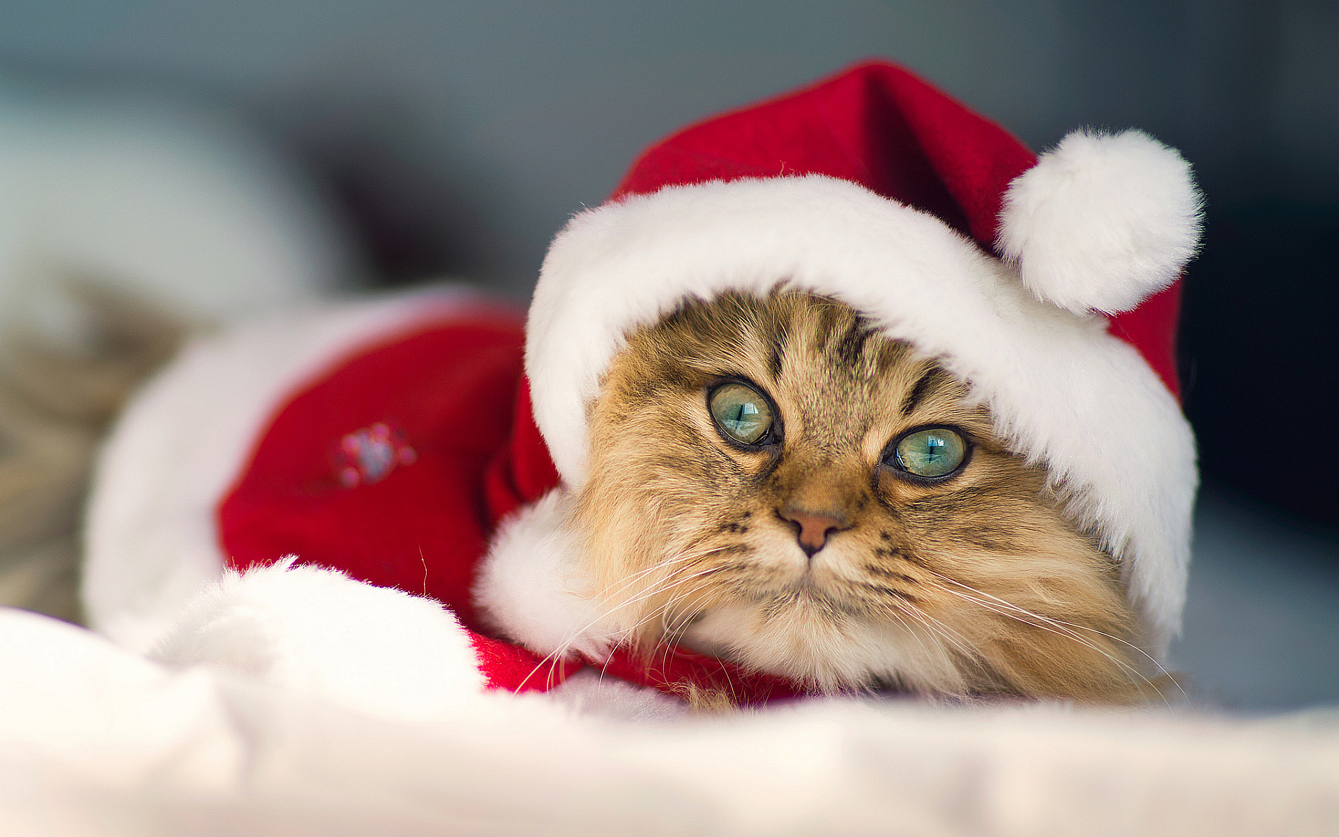 merry christmas wallpapers cat