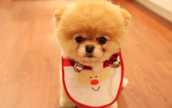 merry christmas wallpapers cute dog