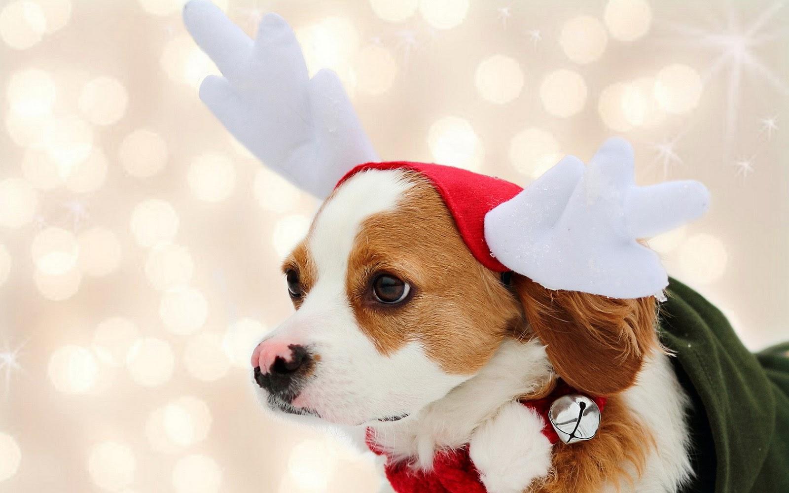 merry christmas wallpapers dogs - HD Desktop Wallpapers | 4k HD