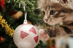 merry christmas wallpapers kitty
