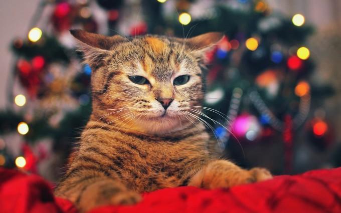 merry christmas wallpapers lights hd