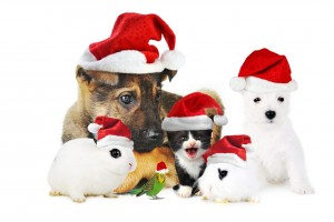 merry christmas wallpapers pets
