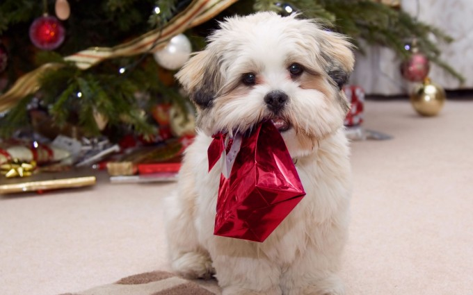 merry christmas wallpapers pup