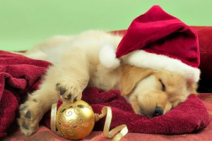 merry christmas wallpapers puppy hd