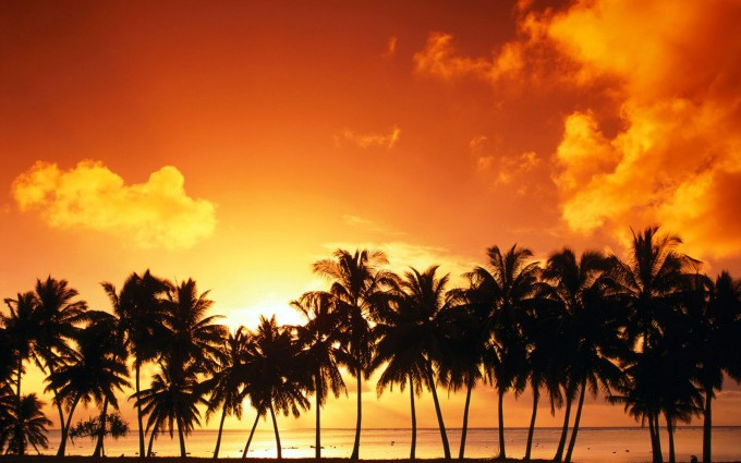 ocean wallpaper palm trees