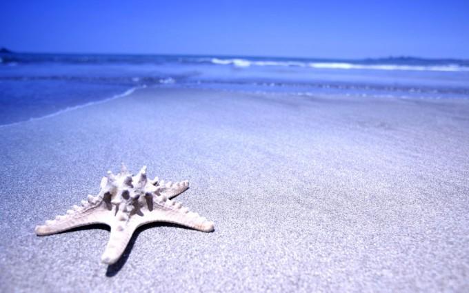 ocean wallpaper star fish