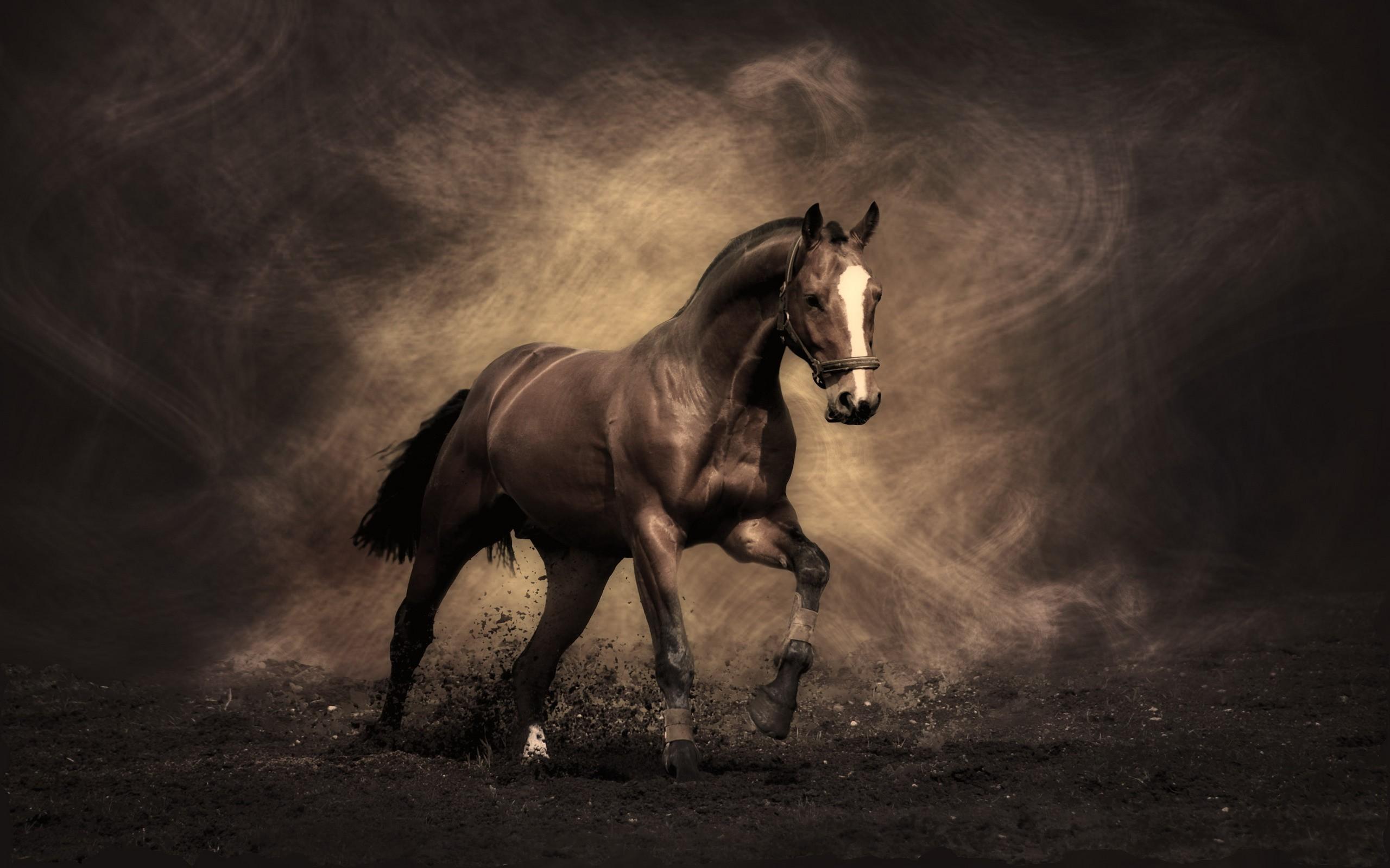 photos of horses