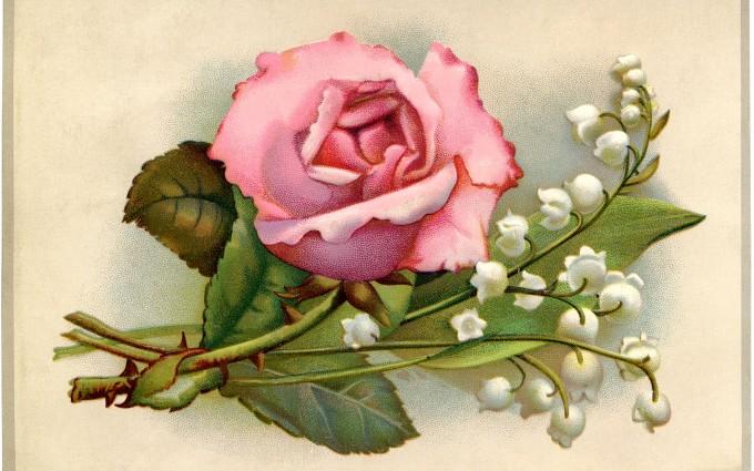 pink floral wallpaper rose