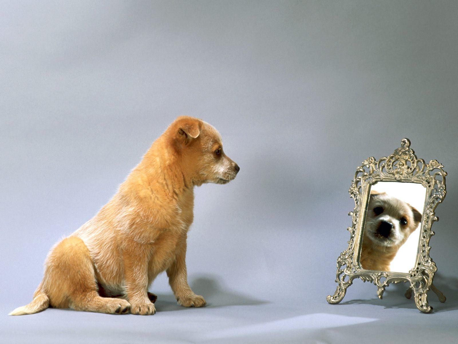 puppy wallpaper dog