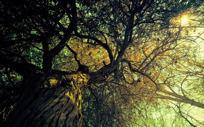 retro wallpaper tree