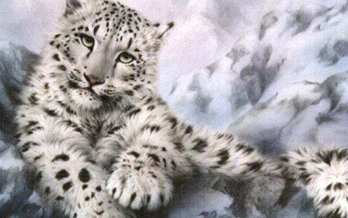 snow leopard wallpaper beautiful
