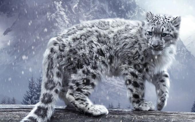 snow leopard wallpaper cool