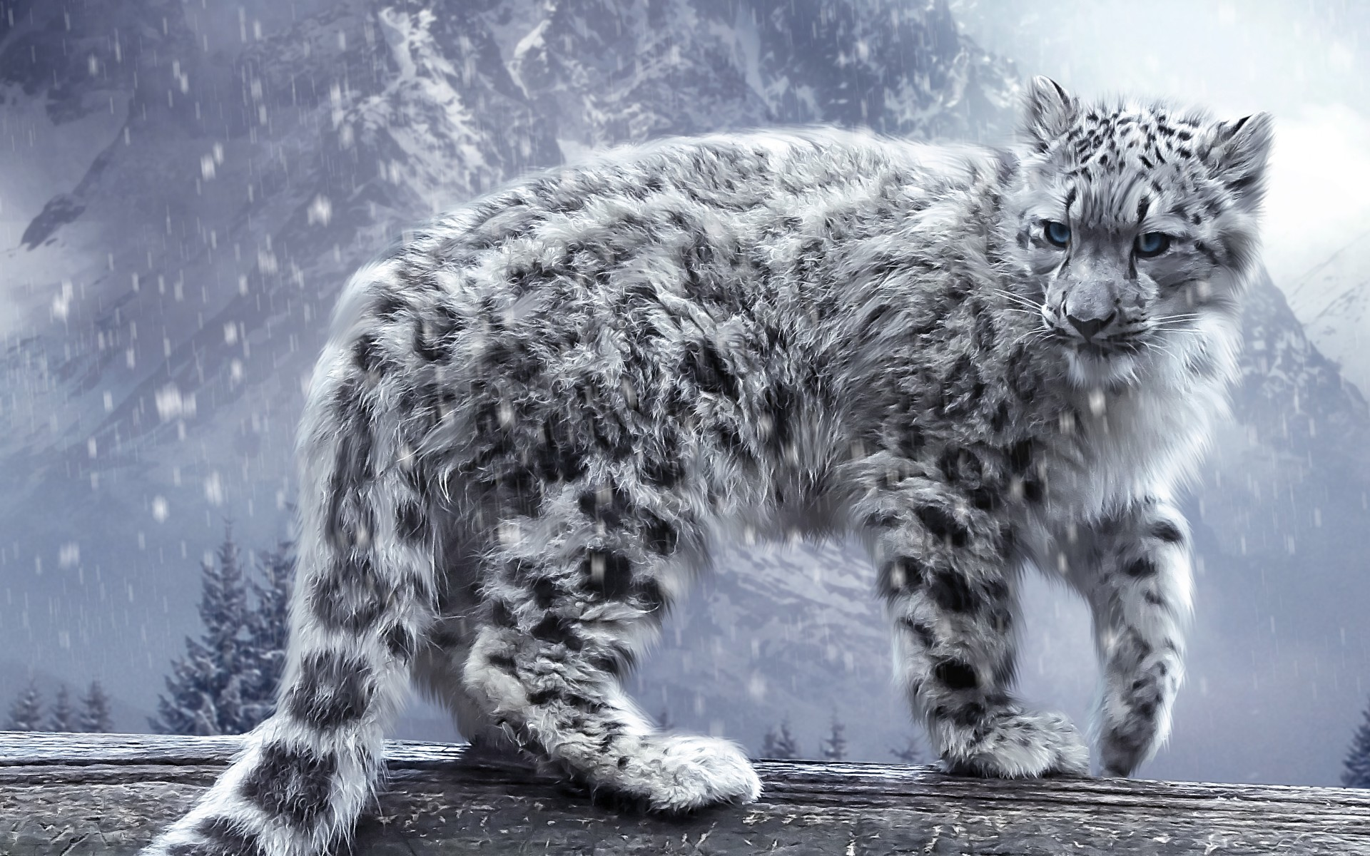 snow leopard wallpaper cool