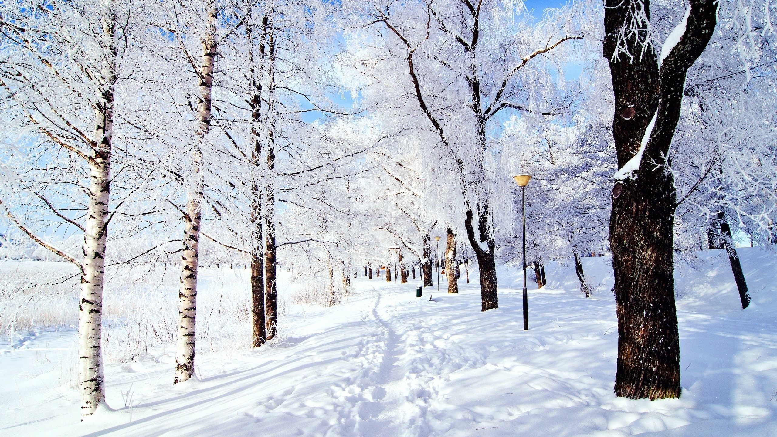 snow pictures wallpaper
