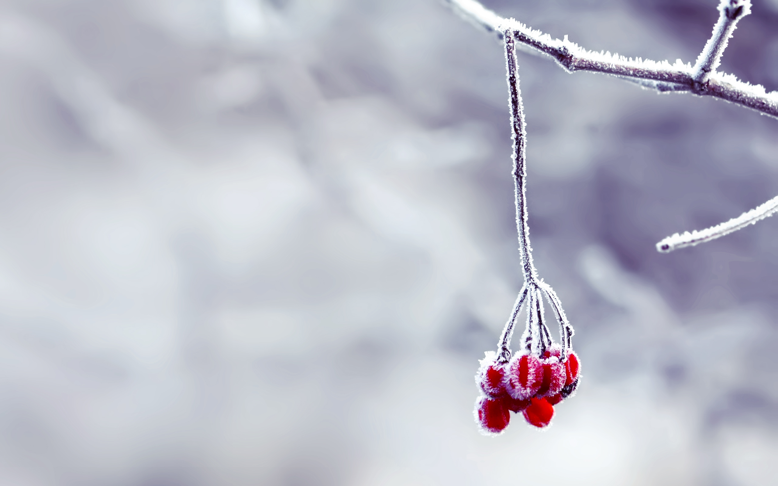 snow wallpaper berries HD Desktop Wallpapers 4k HD