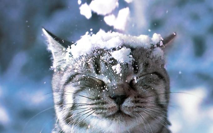 snow wallpaper cat