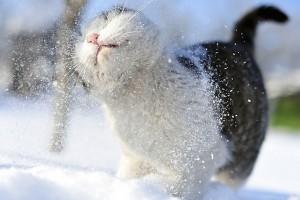 snow wallpaper cat cute
