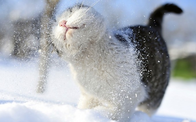 snow wallpaper cat cute