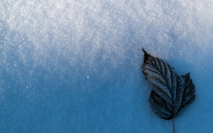 snow wallpaper leaf