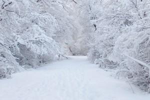 snow wallpaper perfect