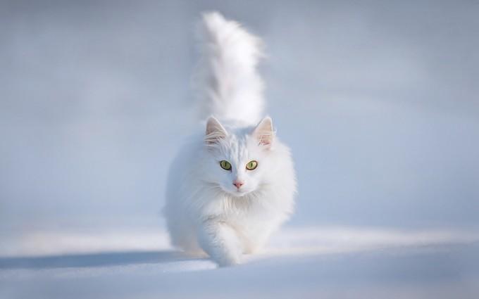 snow wallpaper persian cat