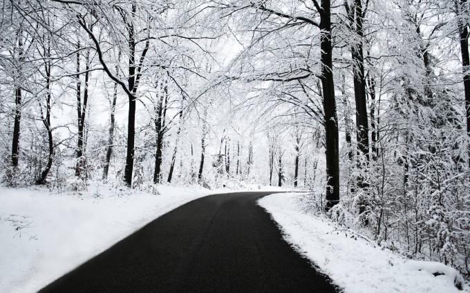 snow wallpaper road trees