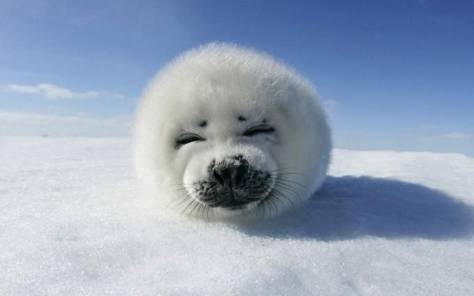 snow wallpaper seal