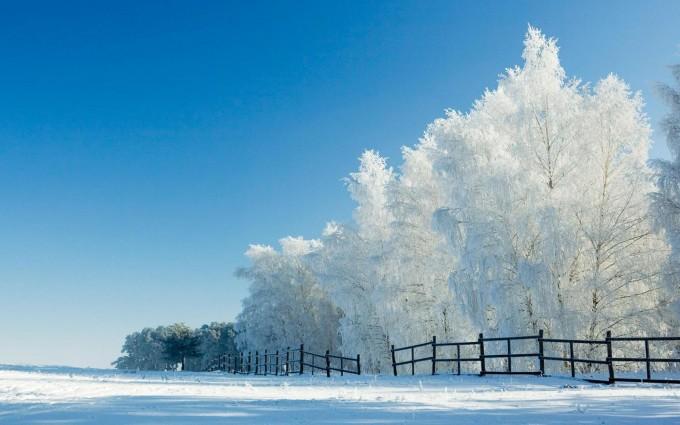 snow wallpaper walls
