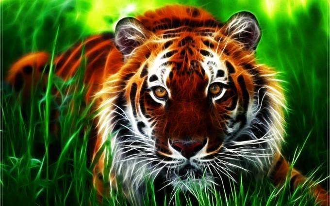 tiger wallpaper beautiful nature