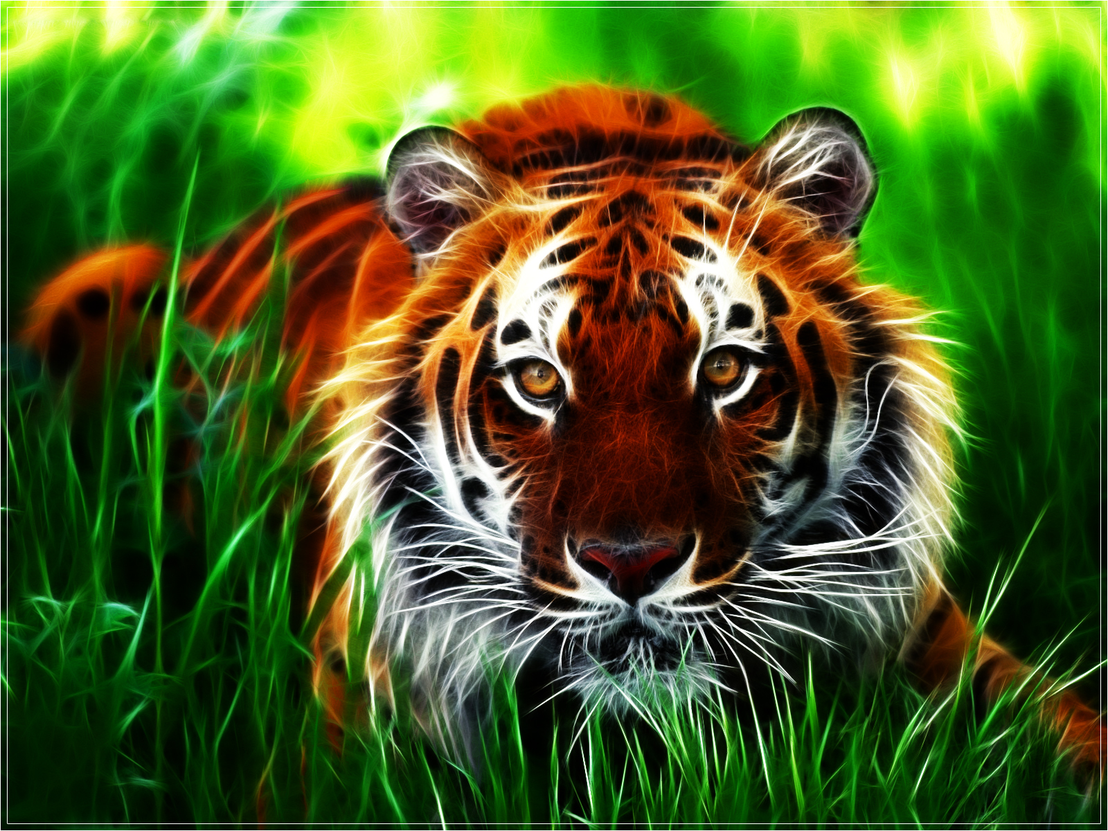 tiger wallpaper beautiful nature