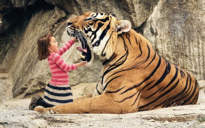 tiger wallpaper funny widescreen