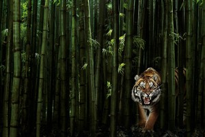 tiger wallpaper green
